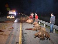 Otomobil sürüye daldı: 19 koyun telef oldu