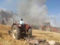 45 dönüm buğday ekili alan kül oldu