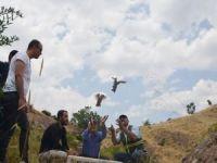 Yüzlerce keklik doğaya bırakıldı