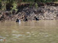 Dicle Nehri'ne düşen gencin cesedine ulaşıldı