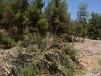 Çevrecilerden Batman Belediyesine ağaç tepkisi