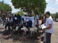 Hayırseverlerin bağışladığı kurbanlar Afrika'da kesildi