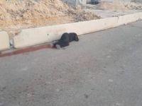 İşgal çeteleri bir Filistinli kadını katletti