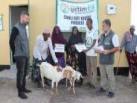 Avrupa Yetim Eli, Kenya'daki yoksul ailelere süt keçisi dağıttı