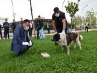 Bağlar Belediyesi Başkanı yiyecek sıkıntısı yaşayan sokak hayvanlarına mama bıraktı