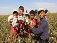 Mardin Ovasındaki çiftçiler, pamuk ekimine başladı
