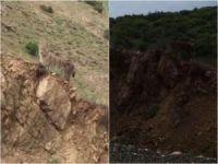 Nesli tükenmekte olan vaşak Elazığ'da görüldü