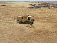 Barış Pınarı bölgesinde hasat başladı
