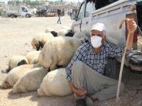 Midyatlı hayvan satıcıları pazar yeri taleplerini yineledi