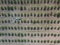 11 milyon metrekare hazine arazisi ağaçlandırma için kiraya verildi