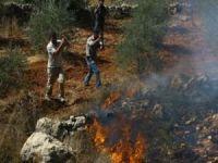 Siyonist yerleşimciler Filistinlilerin en önemli gelir kaynağı zeytin ağaçlarını yakıyor