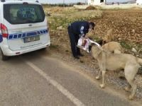 Gaziantep'te sokak hayvanlarına yiyecek bırakıldı