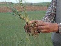 Kuraklık nedeniyle zor günler geçiren çiftçi yetkililerden destek istiyor
