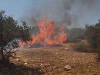 Siyonist işgalciler el-Halil'de Filistinli çiftçilerin ekinlerini ateşe verdi
