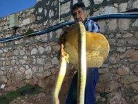 Tavuklarını yiyen koca yılanı tüfekle öldürdü