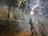 Orman yangınları 146 noktada kontrol altına alındı, 8 yangın sürüyor