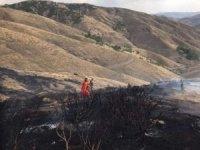 Bingöl'de orman yangını çıktı