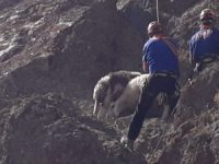 Kayalıklarda mahsur kalan koyunlar uzun uğraşlar sonucu kurtarıldı