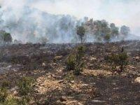 Manavgat'taki orman yangını kontrol altına alındı