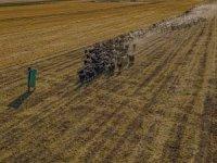 Yem ve saman fiyatlarının artışı hayvancılığı bitirme noktasına getirdi