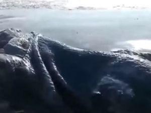 4 metrelik deniz canavarı görüldü
